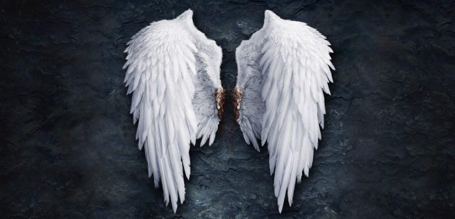 angel-wings-wallpaper-1280x800